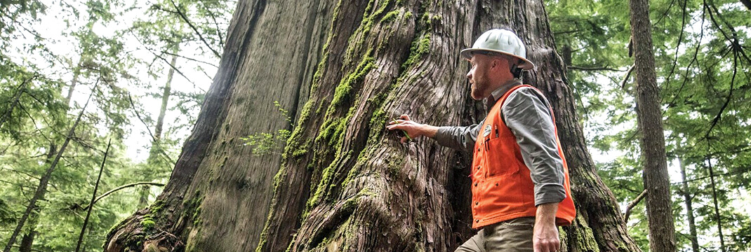 Operations-Research-Challenges-in-Forestry